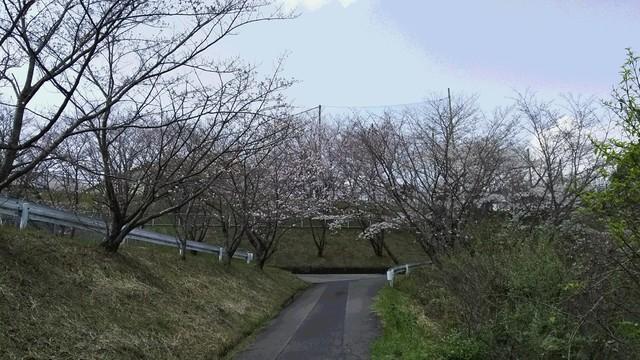 桜2019春.JPG